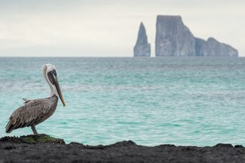 Pelican standing on rock with Kicker Rocker in the distance.