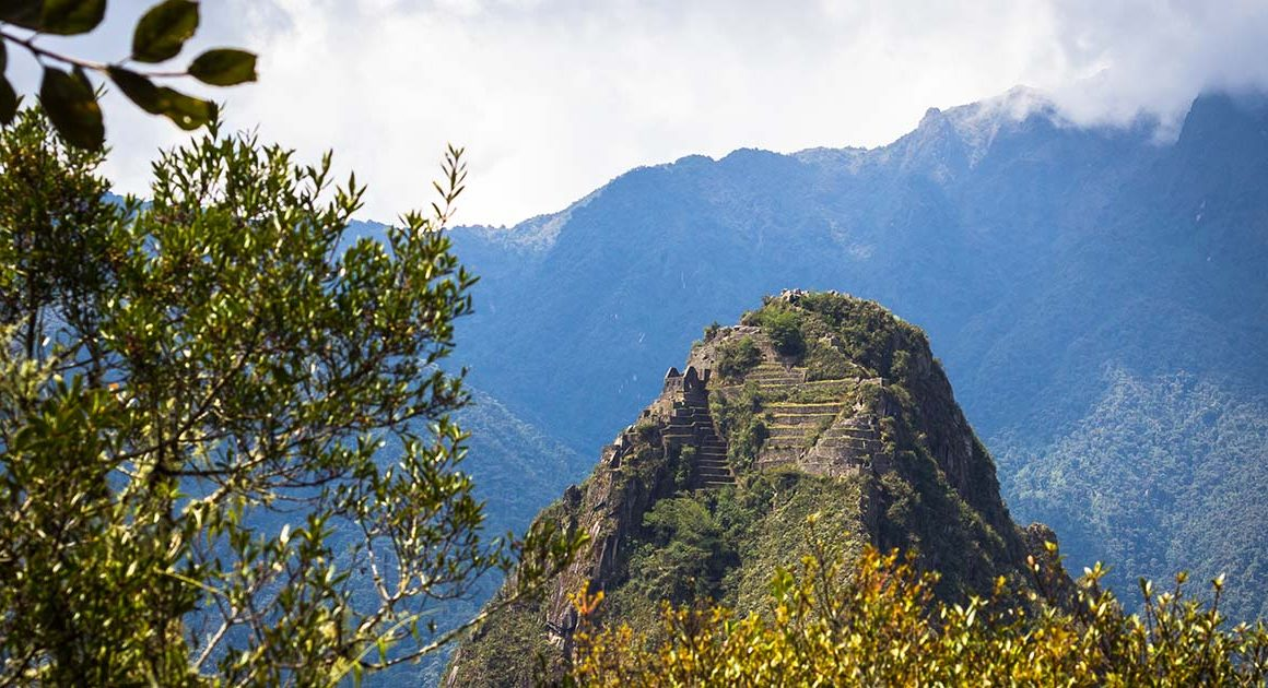 Huayna Picchu's peak with plants in the foreground. The terraces and ruins are visible on top of Huayna Picchu.