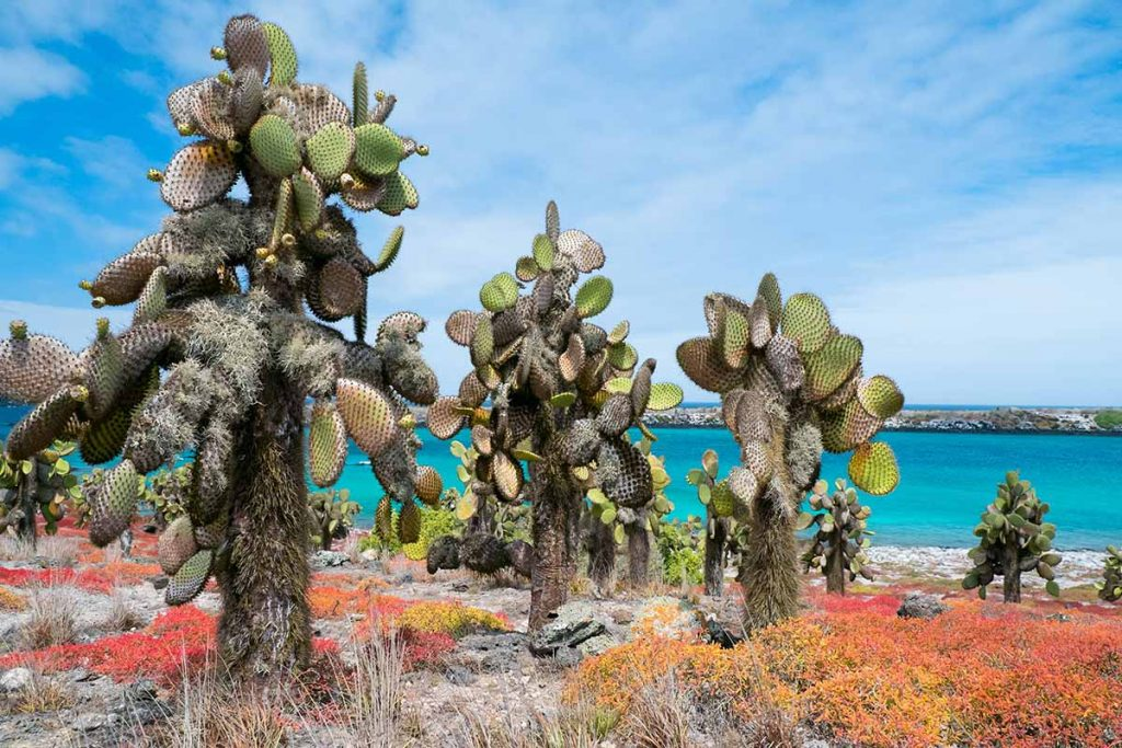 Prickly pear cactus trees surrounded by yellow, orange, and red sea-purslane plants, with turquoise water in the background.