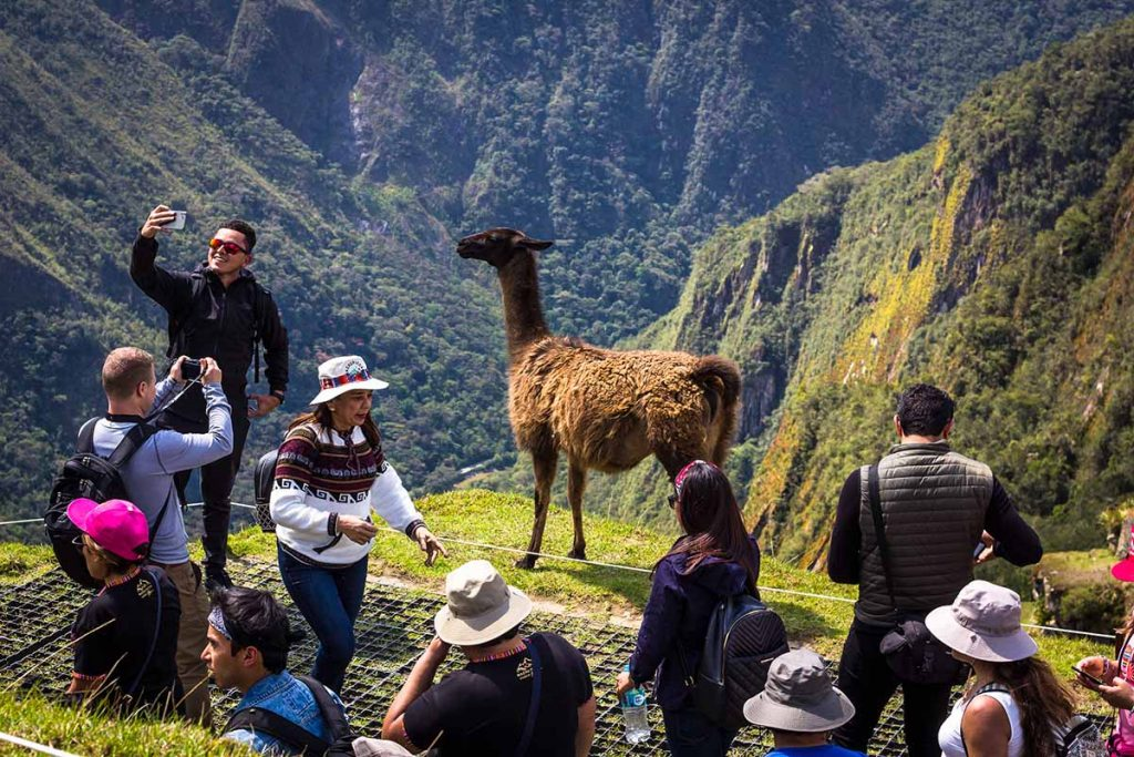 A tourist smiles while taking a selfie with a llama in Machu Picchu. The group of tourists around him are also taking pictures and enjoying the scenery.