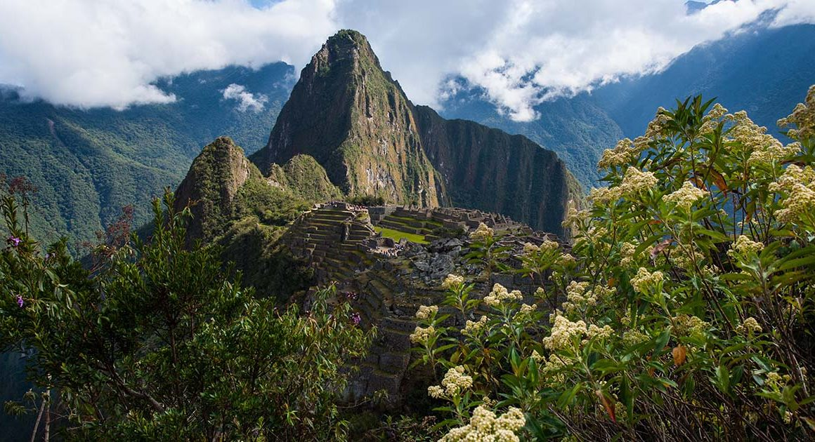 A view of Machu Picchu with flowers and greenery in the foreground. Huayna Picchu is visible in the background.