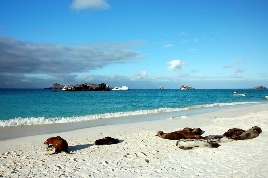A group of sea lions lay on the white sandy beach of the Galapagos Islands. The tour boats can be seen in the distance.