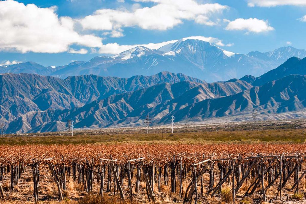 The grape vines of Mendoza Wine Country glow in the forefront with mountains rising in the background.