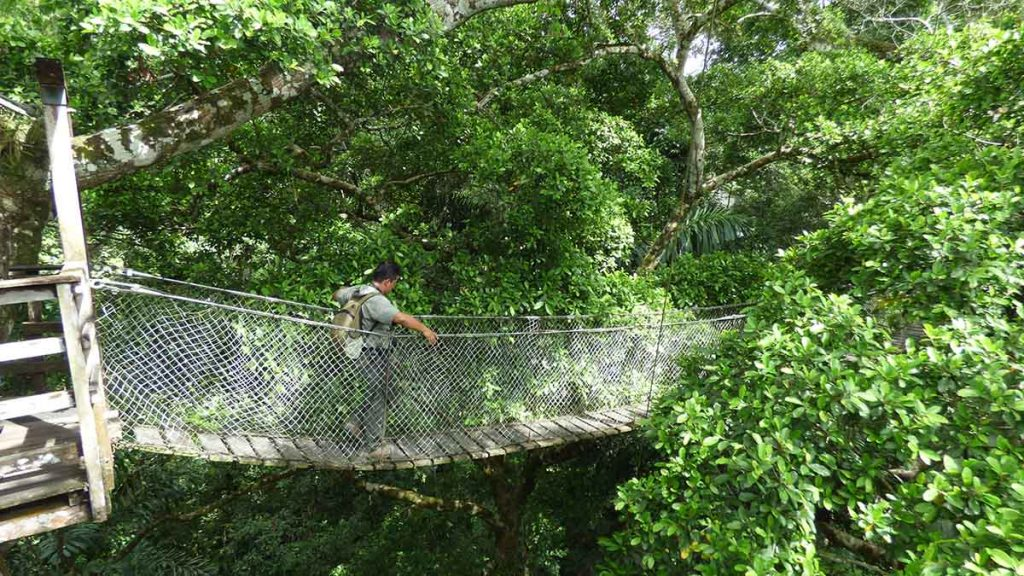 A tour guide crossing the Inkaterra canopy walkway.