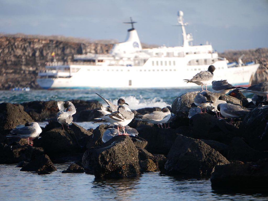 Seabirds perching on rocks with a white cruise ship and cliffs in the background.
