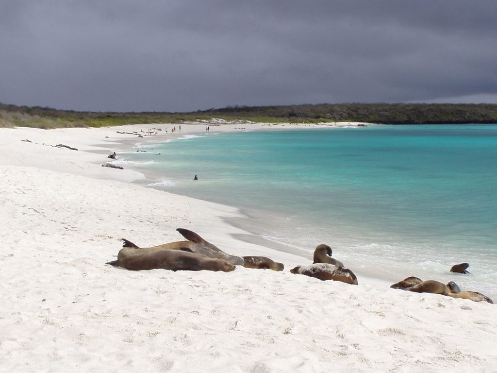 Several sea lions lounge on a white sandy beach of a turquoise bay with tourists walking in the distance.