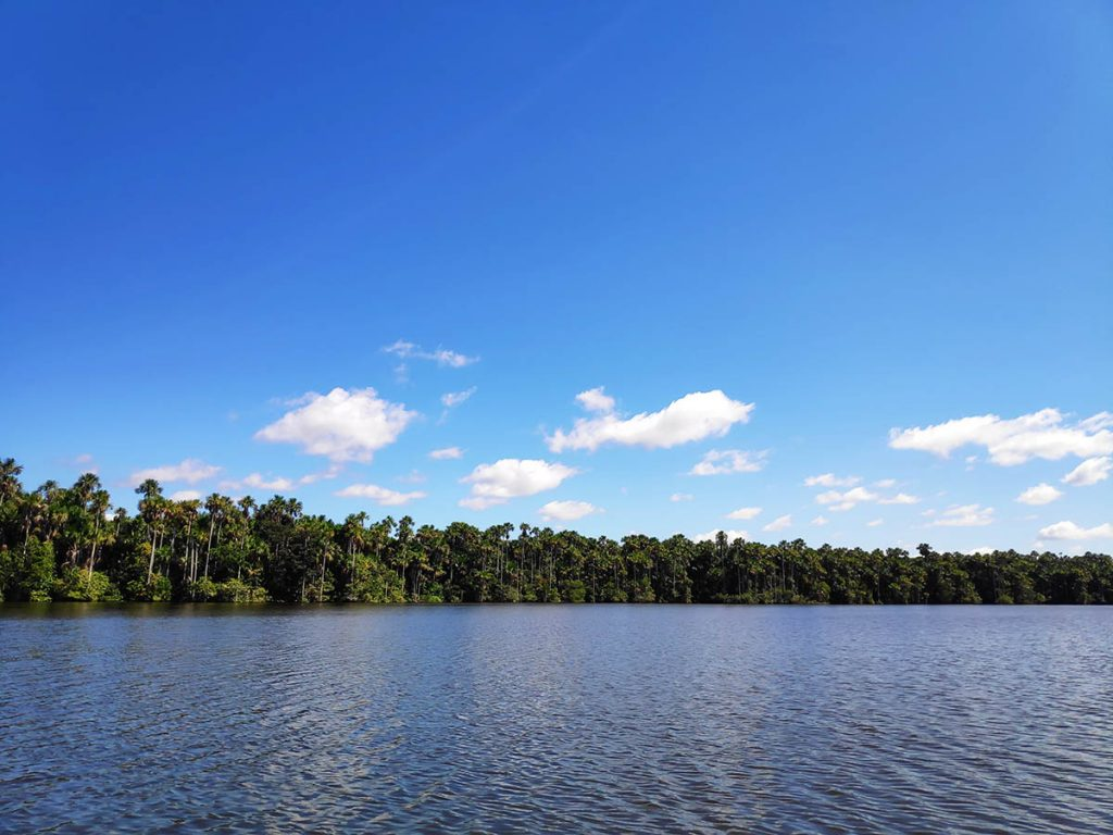 The tree-lined Lake Sandoval with bright blue sky and little fluffy clouds.