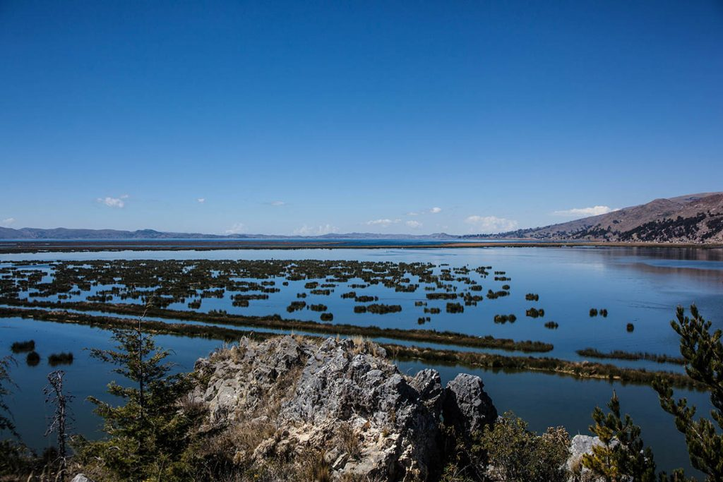 The deep blue waters of Lake Titicaca and it's totora reed-filled shoreline.