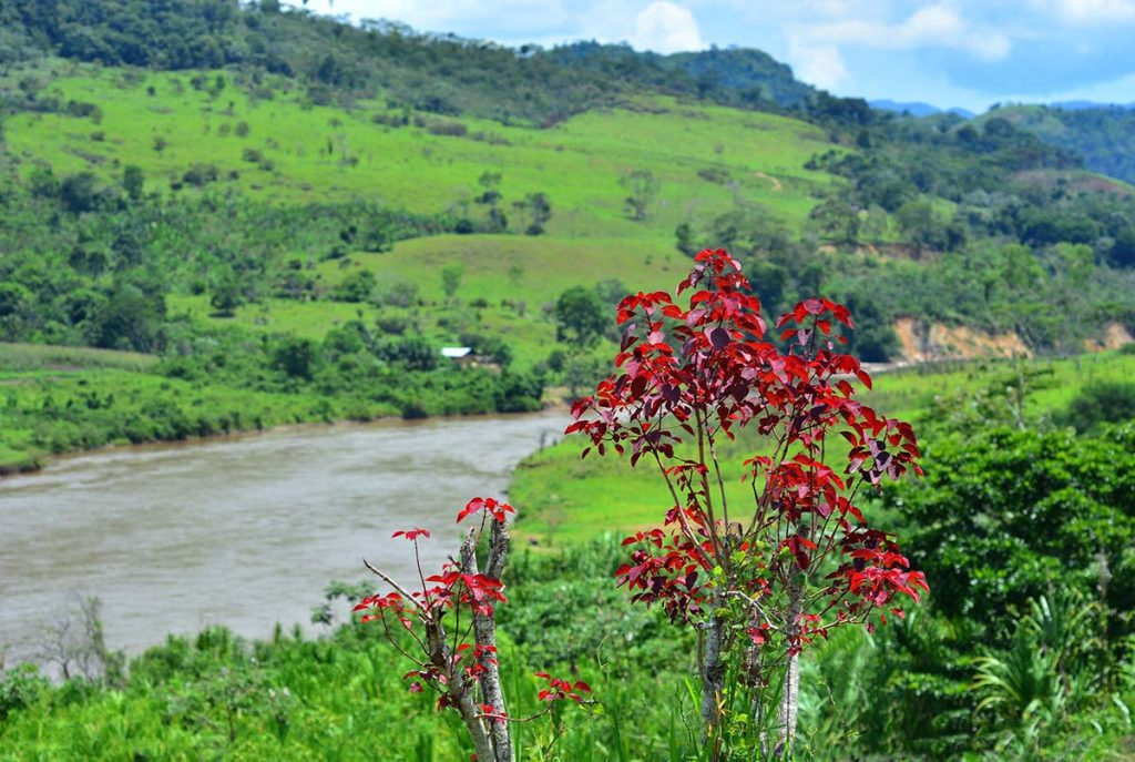 Bright green deforested hills surrounding a river with bright red-leafed plant in the foreground.