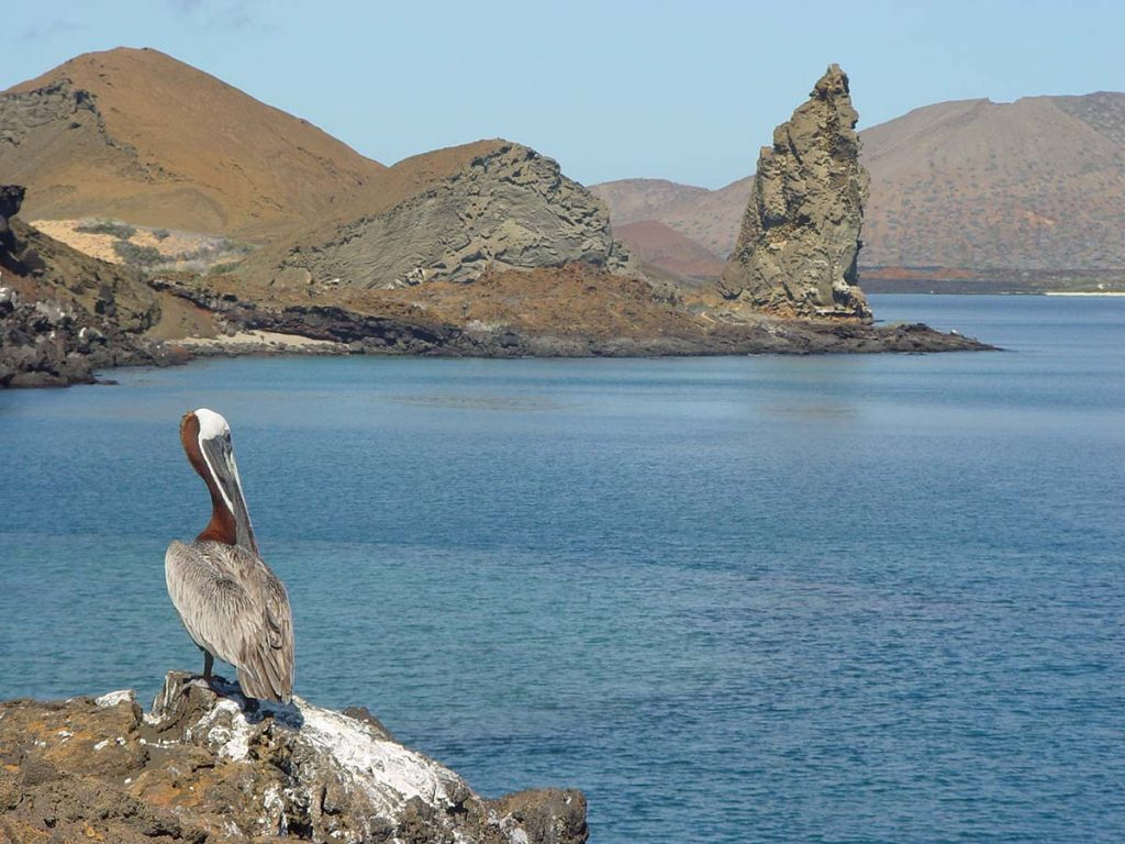 A pelican sitting on a wrong looking out at the ocean with a large, pointed volcanic rock in the background