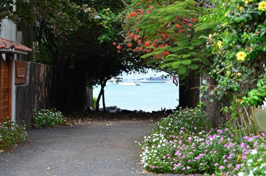 A dirt path leading to a view of the sea with flowers and trees surrounding it.