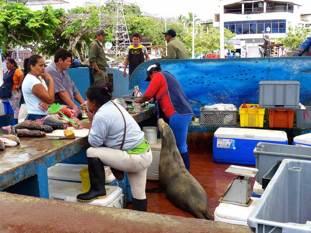 Two women in rain boots attend customers over a table at a fish market while a sea lion stands between them begging for fish.
