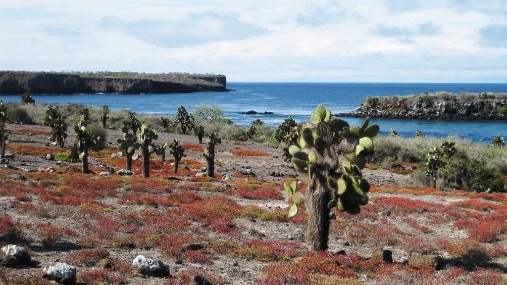 Red and orange sea purslanes as well as cacti are scattered over the rocky terrain of South Plaza Island.