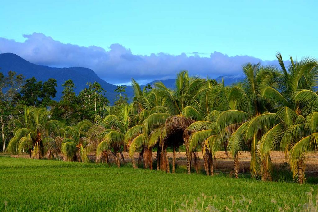 Green grass, a row of palm trees, dark blue mountains, and bright cyan-blue sky.