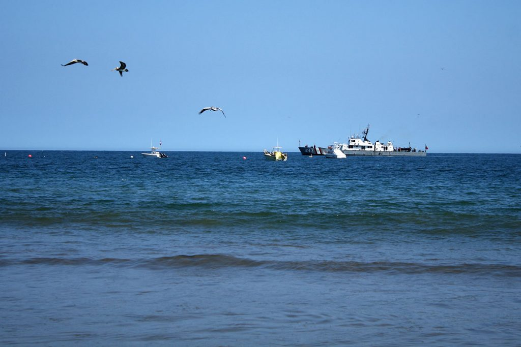 Seabirds observed from Tumbes' Punta Sal Beach.